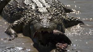 مشاهده کشنده ترین حیوانات جهان ، عکس