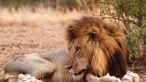 1845.ThumbL dans LION