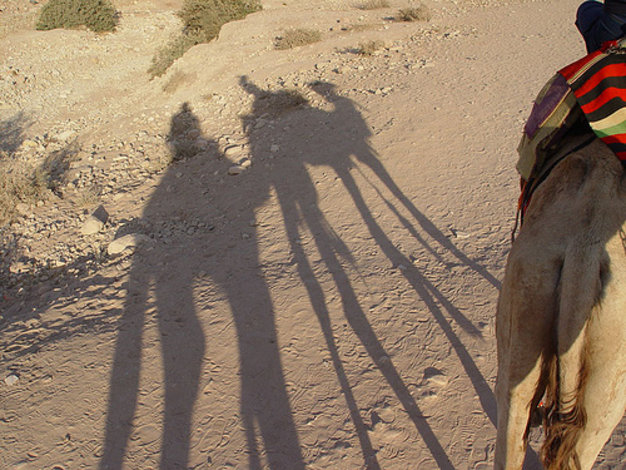 Camel trekking in The Wadi Rum - Jordan