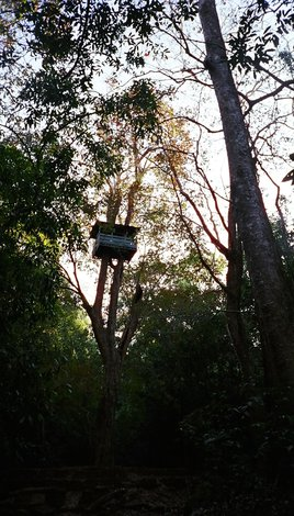 Super-high tree house in the Indian jungle!!