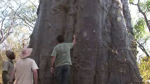 In search of the Baobab